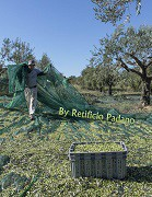 Reti raccolta olive made in italy